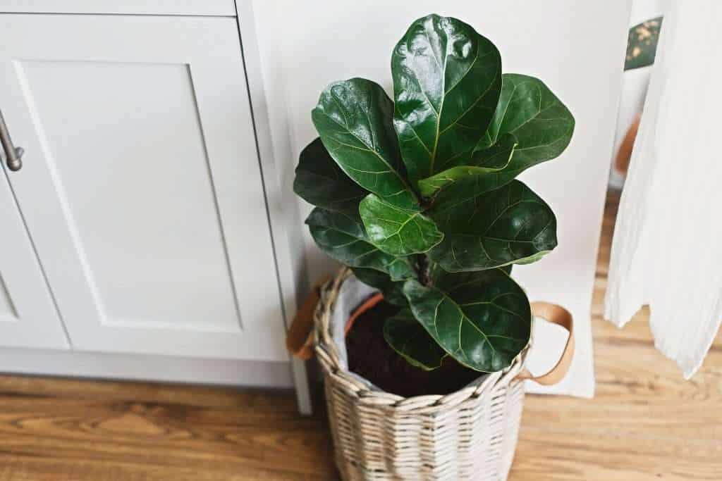 move small plant